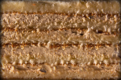 КАРАМЕЛЬНАЯ - несколько слоев легкого бисквита, пропитанного сахарным сиропом, растительные взбитые сливки с добавлением сгущенного молока, грецкого ореха и шоколадной крошки